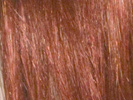 swatch of wig color 350